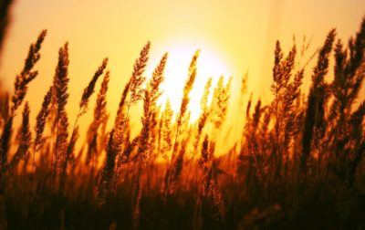 sun salutations lesson plan
