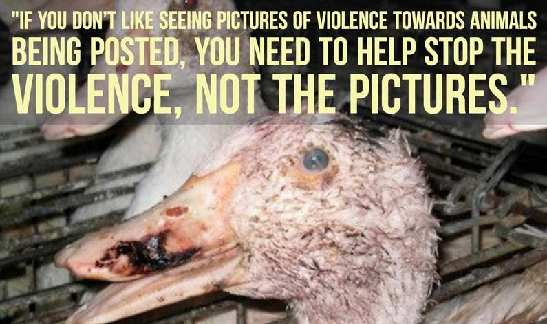 stop the animal violence
