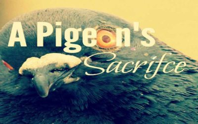A Pigeon's Sacrifice: The Death That Raised Our Collective Awareness