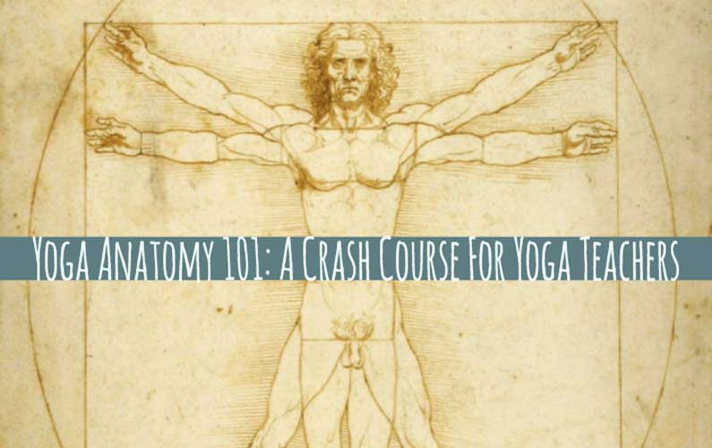 Yoga Anatomy 101: A Crash Course For Yoga Teachers
